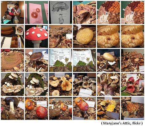 Fungus Fair 2007