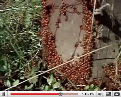 Redwood Park Ladybugs