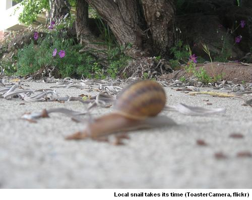 Montclair Snail