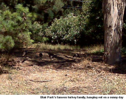 Blair Park's Turkey Family