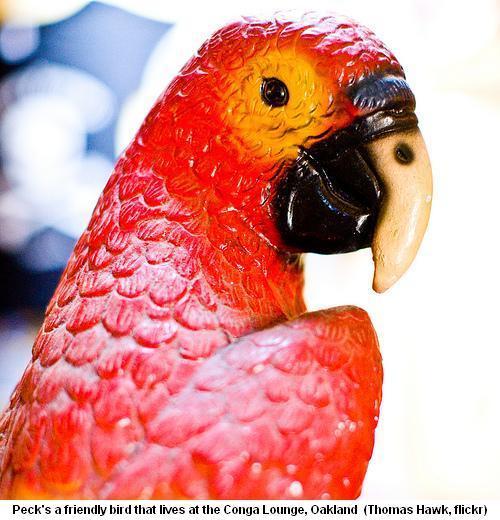 Peck, Conga Lounge