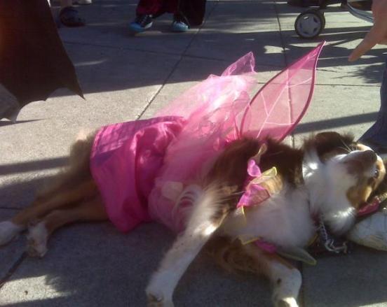 Halloween 2009 - Angelic Dog