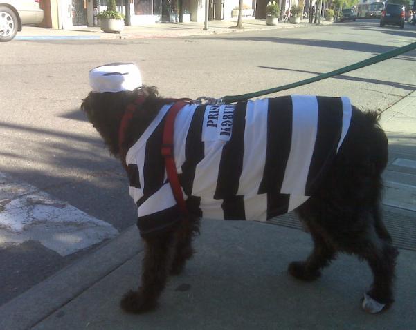 Halloween 2009 - Prison Dog